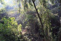 Pradawny las obrazy royalty free