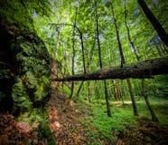 Pradawny las Zdjęcie Stock