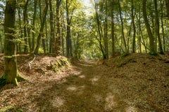 Pradawny las na Darss zdjęcie royalty free