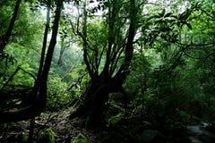 Pradawny las na Yakushima w niesamowitym świetle, Japonia obrazy stock