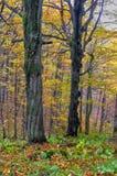 Pradawny las przy Kremnicke Vrchy górami obrazy royalty free