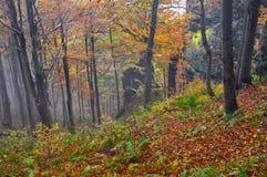 Pradawny las przy Kremnicke Vrchy górami zdjęcie stock