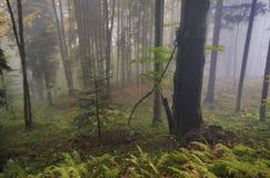 Pradawny las przy Kremnicke Vrchy górami zdjęcie royalty free