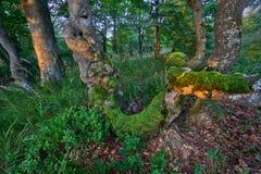 Pradawny las przy Vtacnik górami fotografia royalty free