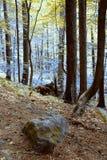 Pradawny las w Południowym Zachodnim Polska Fotografia Stock