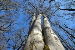 Pradawny lasowy drzewo fotografia royalty free