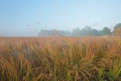 Pradera alta de la hierba en la salida del sol Foto de archivo libre de regalías