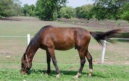 Pradera del caballo imagen de archivo libre de regalías