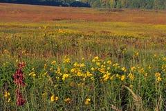 Pradera del otoño Fotos de archivo libres de regalías