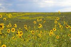 Pradera en la floración Fotografía de archivo libre de regalías