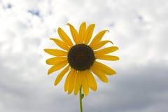 Pradera en la floración Fotografía de archivo