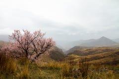Pradera en las montañas Fotografía de archivo libre de regalías