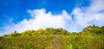 Pradera y cielo azul Imagen de archivo libre de regalías