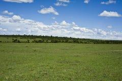 Pradera y cielo azul Kenia fotografía de archivo
