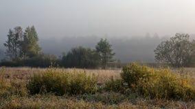 Prado abandonado en la mañana brumosa Imagen de archivo libre de regalías
