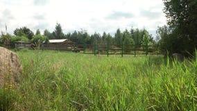 Prado al borde del paisaje rural del verano del bosque con un prado floreciente, camino almacen de metraje de vídeo