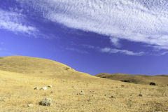 Prado alaranjado com céu azul Fotografia de Stock