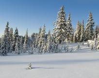 Prado alpestre del invierno Foto de archivo libre de regalías