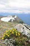 Prado alpestre en parque nacional del jaspe imagen de archivo