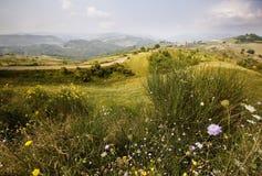 Prado alpino Imagens de Stock