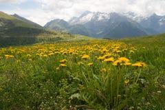 Prado alpino Imagem de Stock Royalty Free
