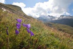 Prado alpino Fotografia de Stock