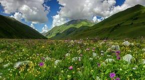 Prado alpino foto de stock royalty free