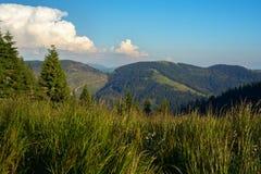 Prado alpino coberto com a grama fresca luxúria Fotos de Stock Royalty Free