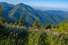 Prado alpino coberto com os wildflowers luxúrias Imagem de Stock