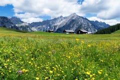 Prado alpino com as flores amarelas bonitas perto de Walderalm Áustria, Tirol fotografia de stock