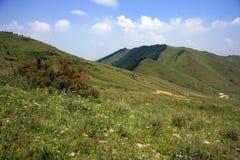 Prado alpino com floresta do pinho Fotos de Stock