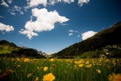 Prado alpino con las flores amarillas y la hierba verde Alp Mountains en el fondo Foto de archivo