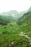 Prado alpino em Rocky Mountains Imagem de Stock