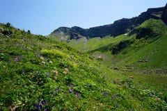 Prado alpino en Sochi Foto de archivo libre de regalías