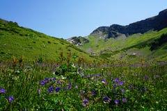 Prado alpino en Sochi Imagen de archivo libre de regalías