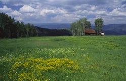 Prado alpino nas Montanhas Rochosas Foto de Stock