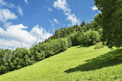 Prado alpino verde luxúria e floresta Foto de Stock Royalty Free