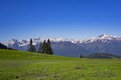Prado alto nas montanhas Fotografia de Stock