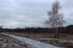 Prado ancho de la nieve con el camino y dos abedules en día nublado Campo del invierno con el bosque y los árboles congelados Pai Imagenes de archivo