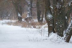 Prado ancho de la nieve con el camino y dos robles en día nublado Campo del invierno con el bosque y los árboles congelados Paisa Fotografía de archivo libre de regalías