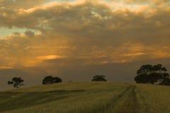 Prado antes de la tormenta del verano foto de archivo libre de regalías