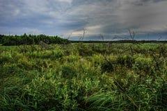 Prado após a chuva no Polônia, amanhecer, fotografia da natureza Foto de Stock Royalty Free