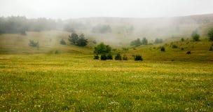Prado bonito com as flores nas montanhas A névoa no b Fotos de Stock