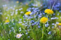 Prado bonito do verão com dentes-de-leão das flores e miosótis, paisagem bonita da natureza foto de stock