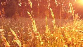 Prado bonito na luz solar mágica filme