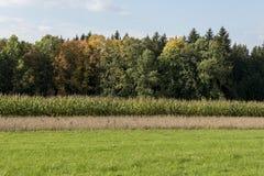 Prado, campo de maíz y árboles verdes con las hojas coloreadas Imágenes de archivo libres de regalías