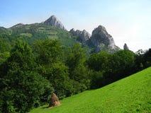 Prado Carpathian Foto de Stock