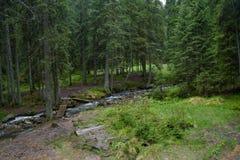 Prado cerca del río en el bosque en las montañas Imagen de archivo libre de regalías