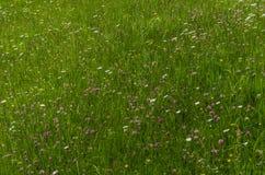 prado colorido da flor na natureza Imagens de Stock Royalty Free