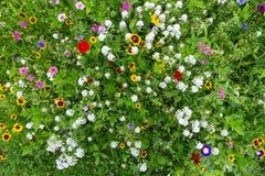 Prado colorido de la flor Fotografía de archivo
